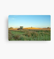 Norman Windrowing At Red Hills.Dookie. Canvas Print