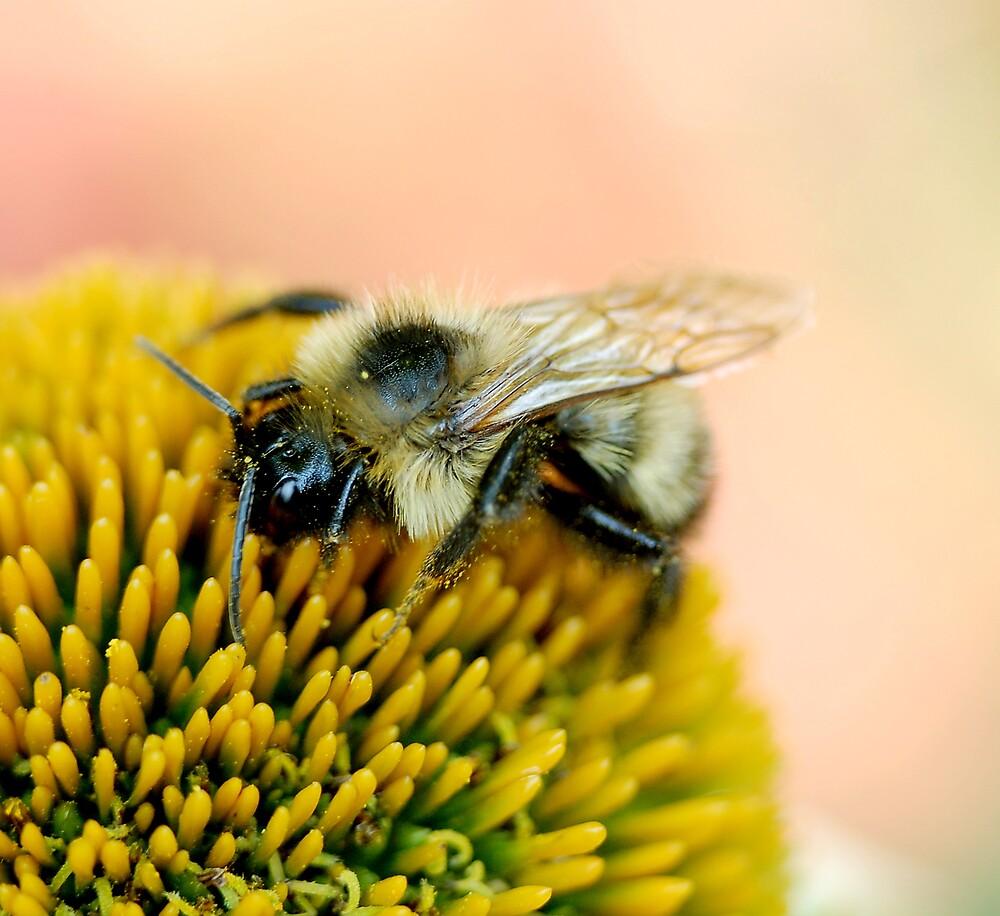 Pollinator by Adrienne Berner