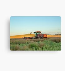 Windrowing Canola...Red Hills. Canvas Print