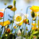 Spring in my garden by Beata  Czyzowska Young