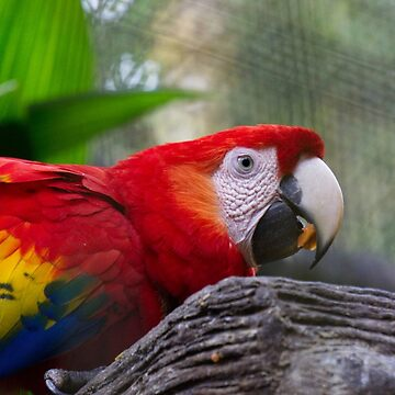 Costa Rican Parrot by jshap