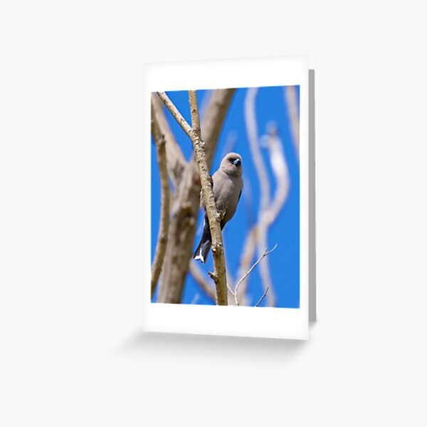 SWALLOW ~ Dusky Woodswallow S4TLQKTV by David Irwin Greeting Card