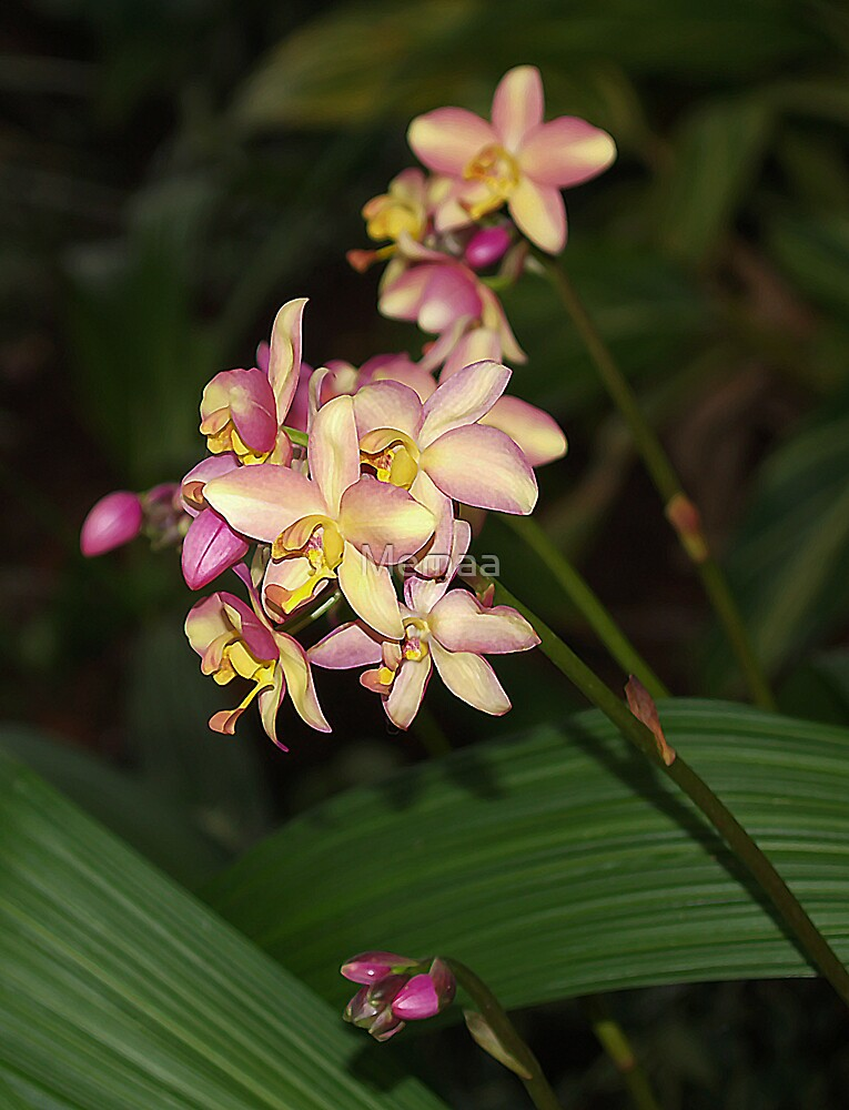 Ground Orchids by Memaa
