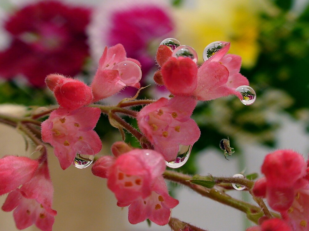 Pink flowers with water droplets by len Janes