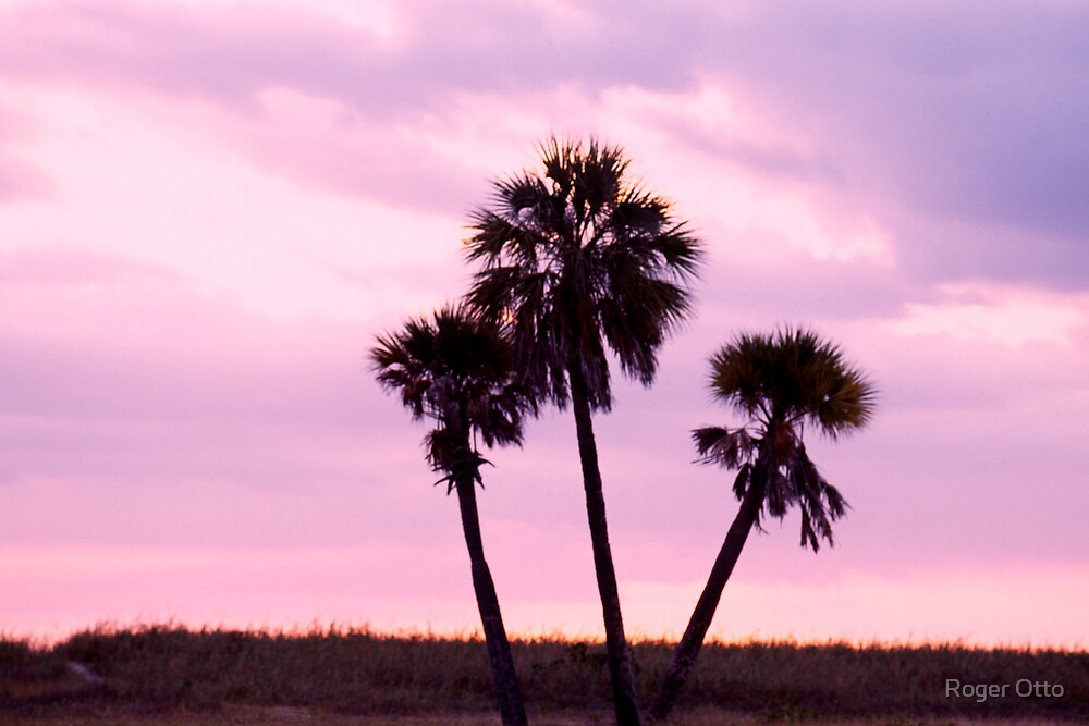 Three Palm Trees by Roger Otto