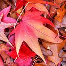 Colourful trees and leaves by Elana Bailey