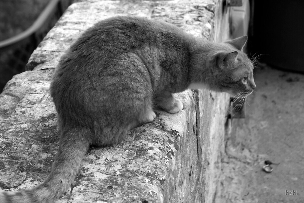 ooo a mouse! by keki
