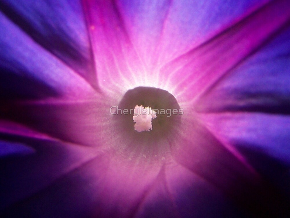Morning Glory by CherylsImages