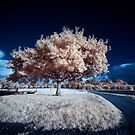 Tree-2 (IR) by PaulBradley