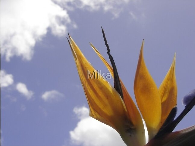 Flower of the Phoenix by Mika