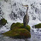Grey Heron at Cong by Margaret  Hyde