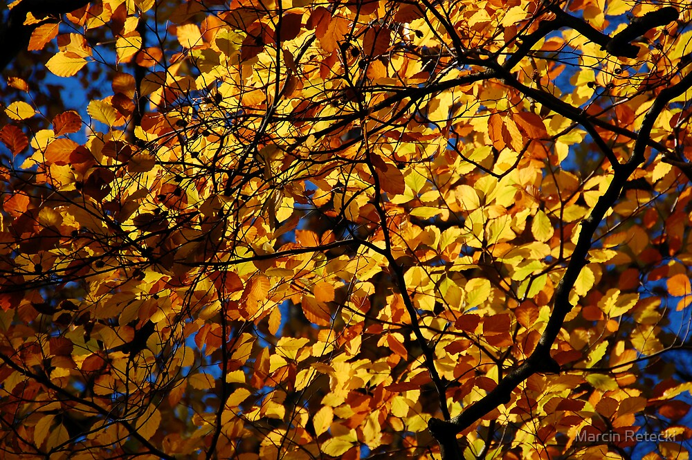 Golden Leafs by Marcin Retecki