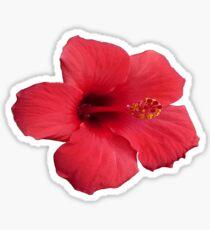 Stunning Red Hibiscus Flower  Sticker