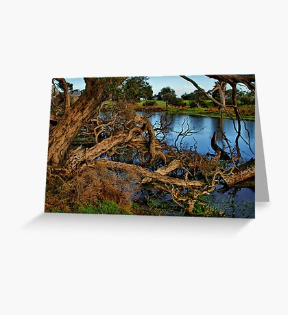 """""""Reaching for the Water"""" Greeting Card"""