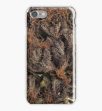 Purple Kush iPhone Case/Skin