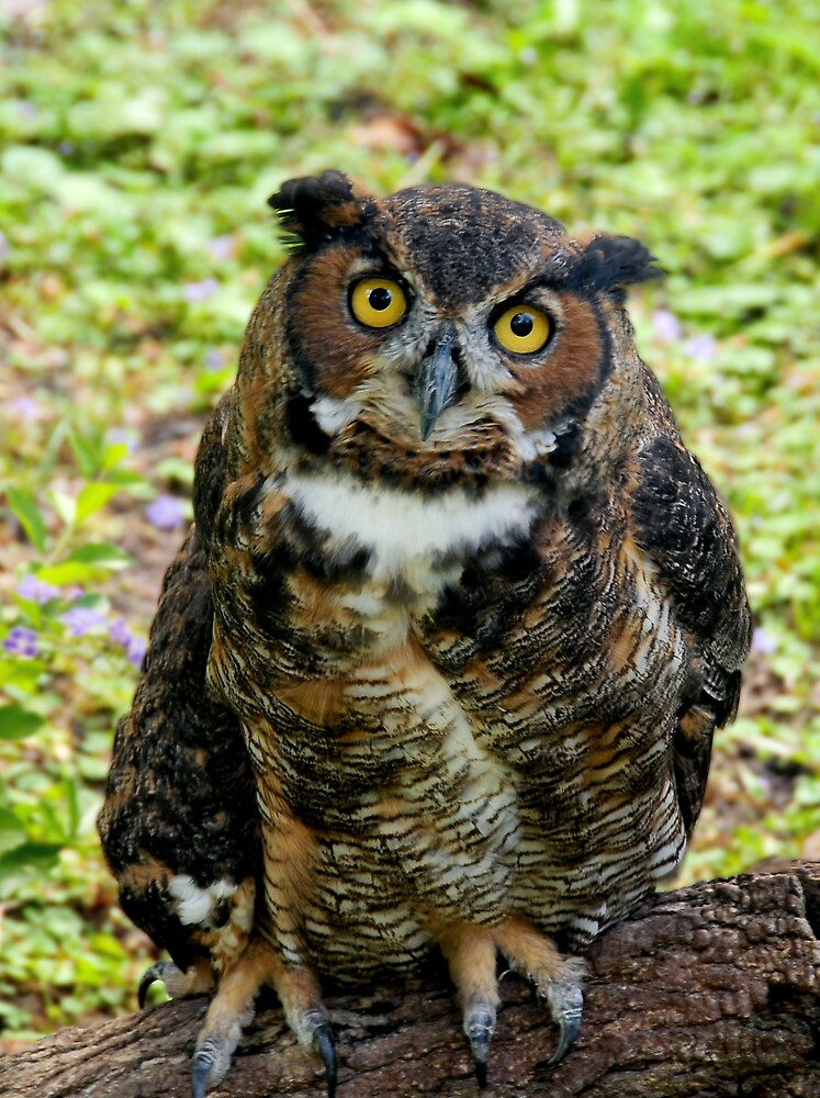 The Great Horned Owl by Rebecca Cruz
