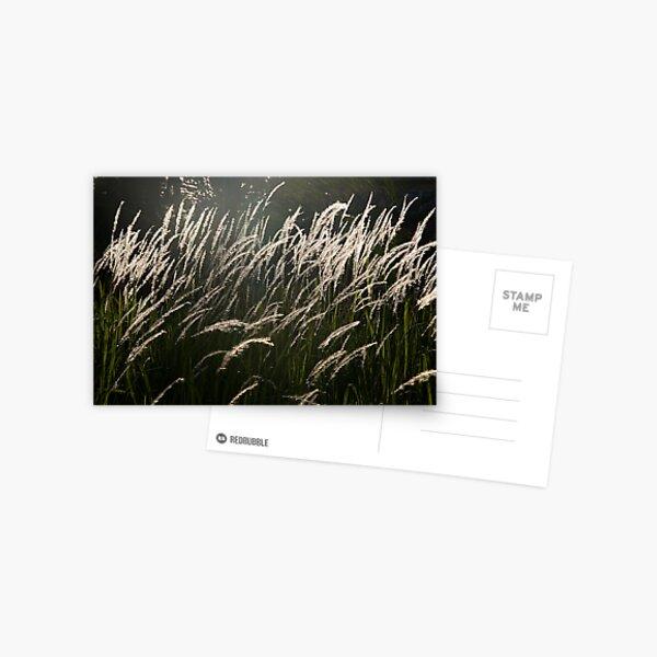 Gentle Breeze Postcard