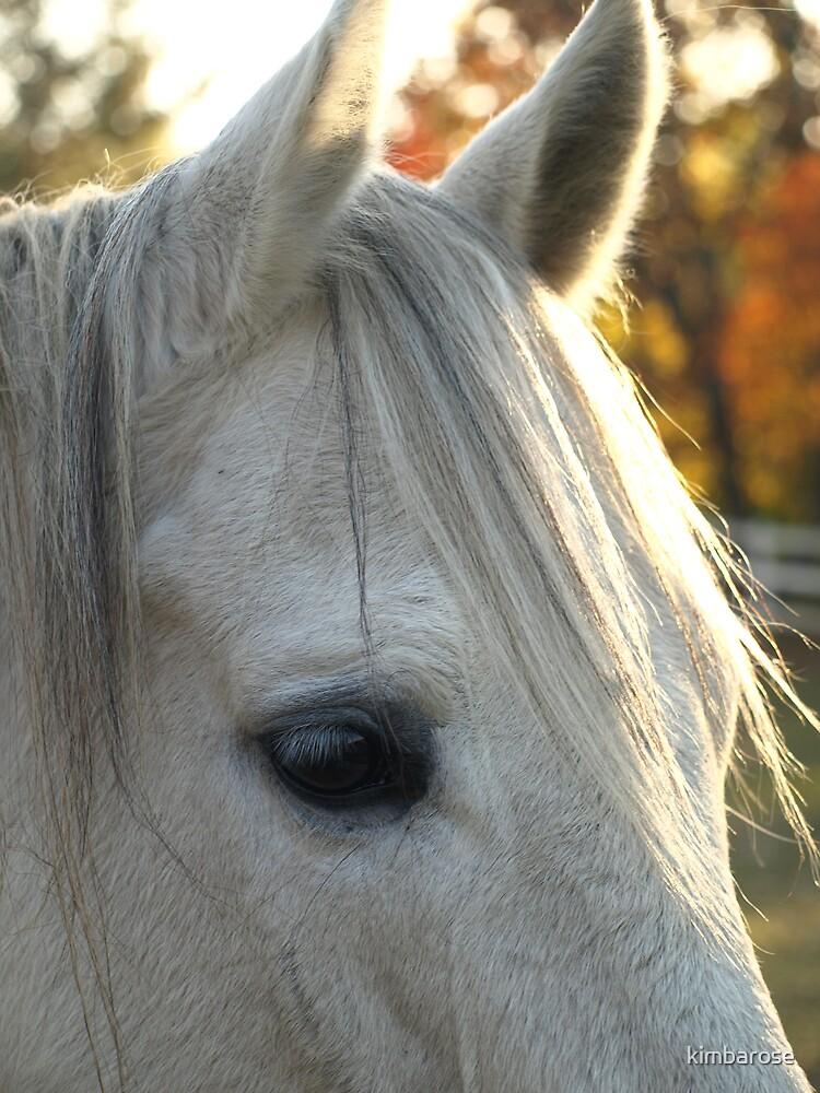 Eye of the Stallion by kimbarose