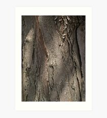 Honey Locust Tree Bark Art Print