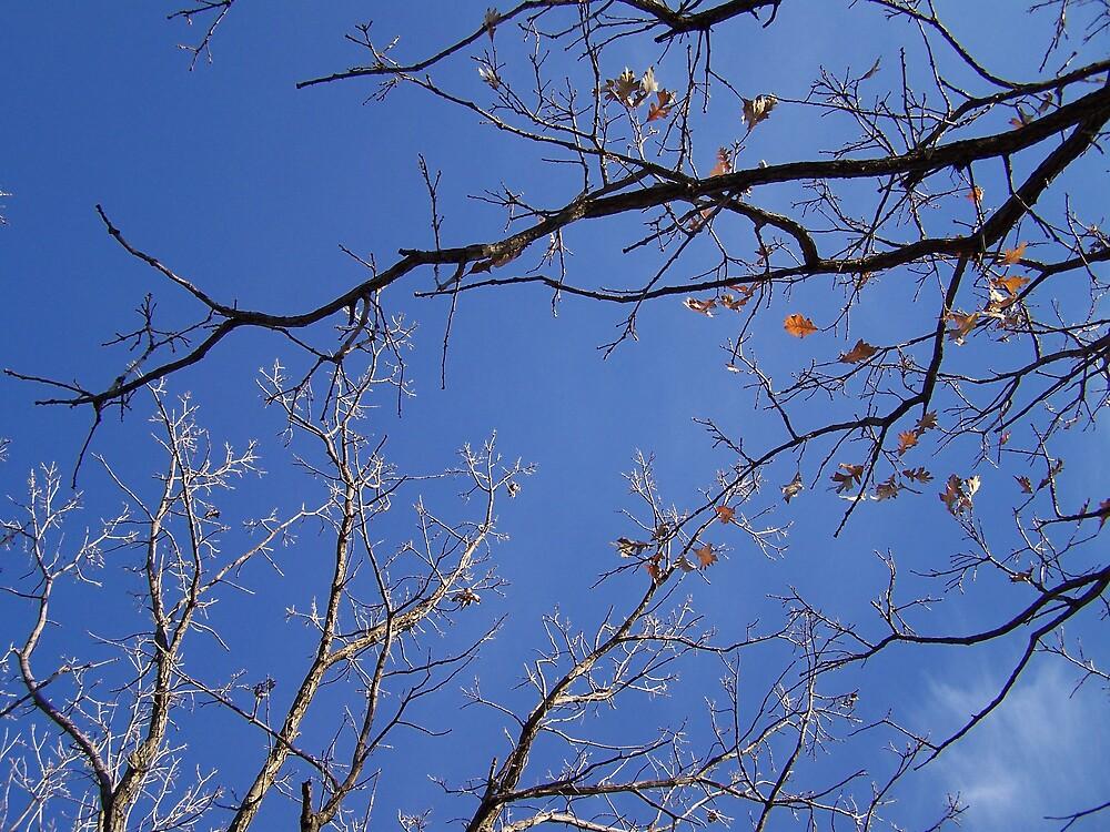 Minnesota Fall Sky by Jessica Ryden