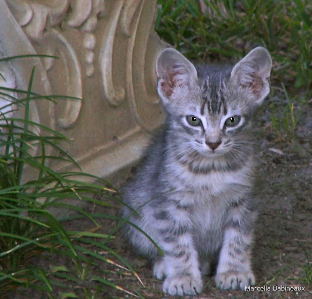 Tabby Kitten  * Izzie * by Marcella Babineaux