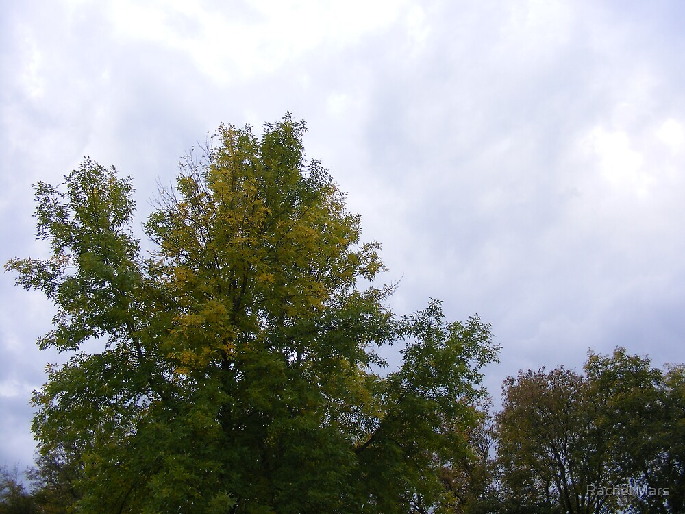 Early Fall Trees by Rachel Mars