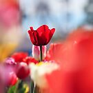 Red in my garden by Beata  Czyzowska Young