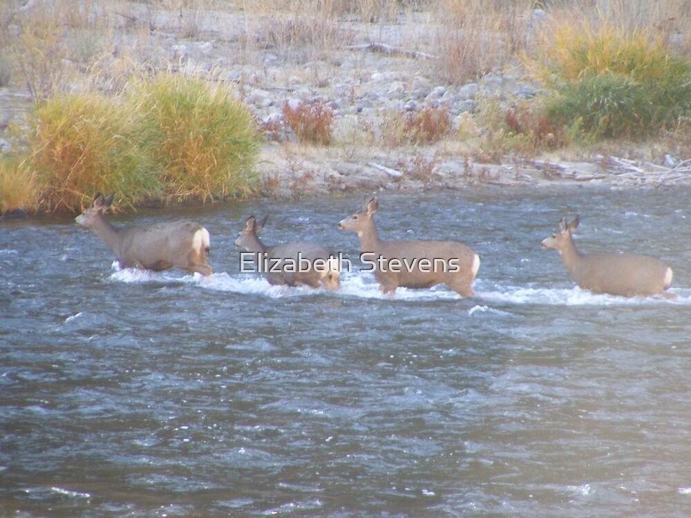 Deer Crossings by Elizabeth Stevens
