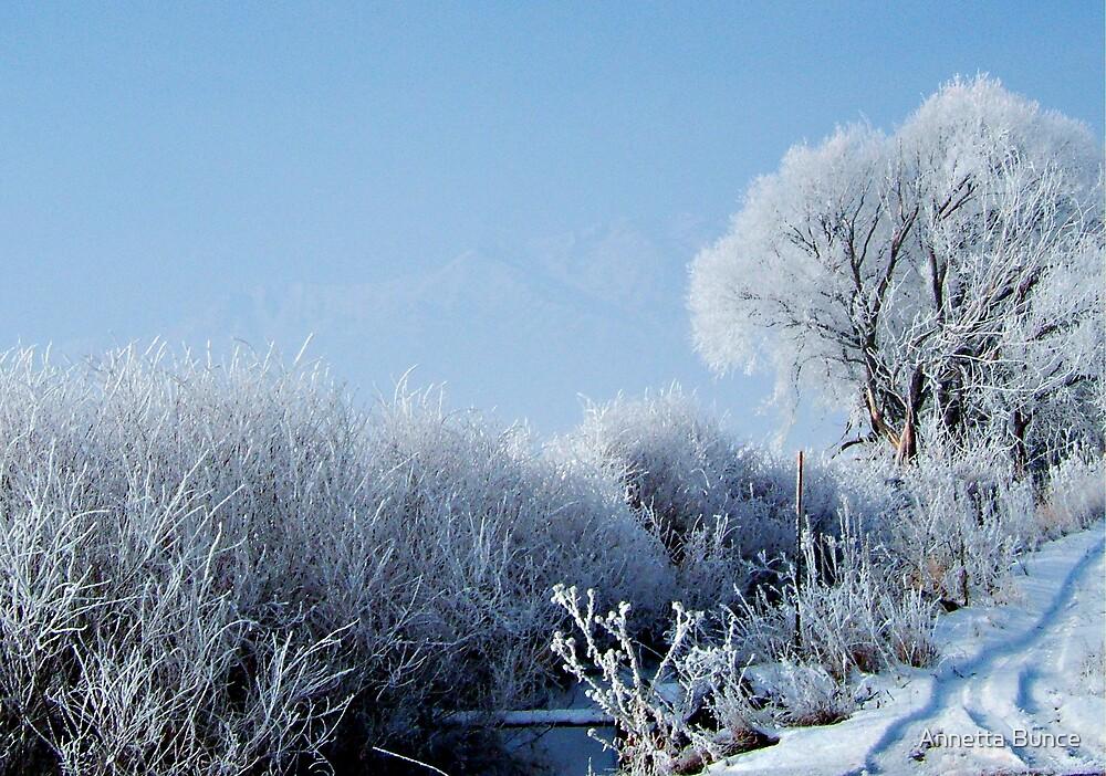 Winter frost by Annetta Bunce
