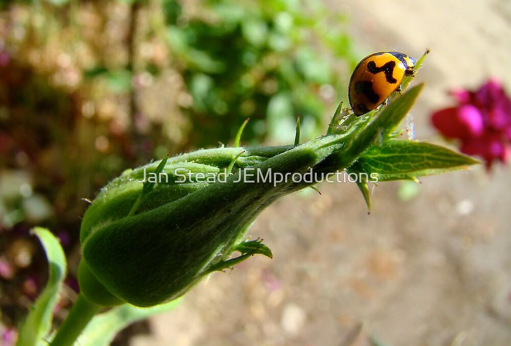 ladybird, ladybird, fly away home by Jan Stead JEMproductions