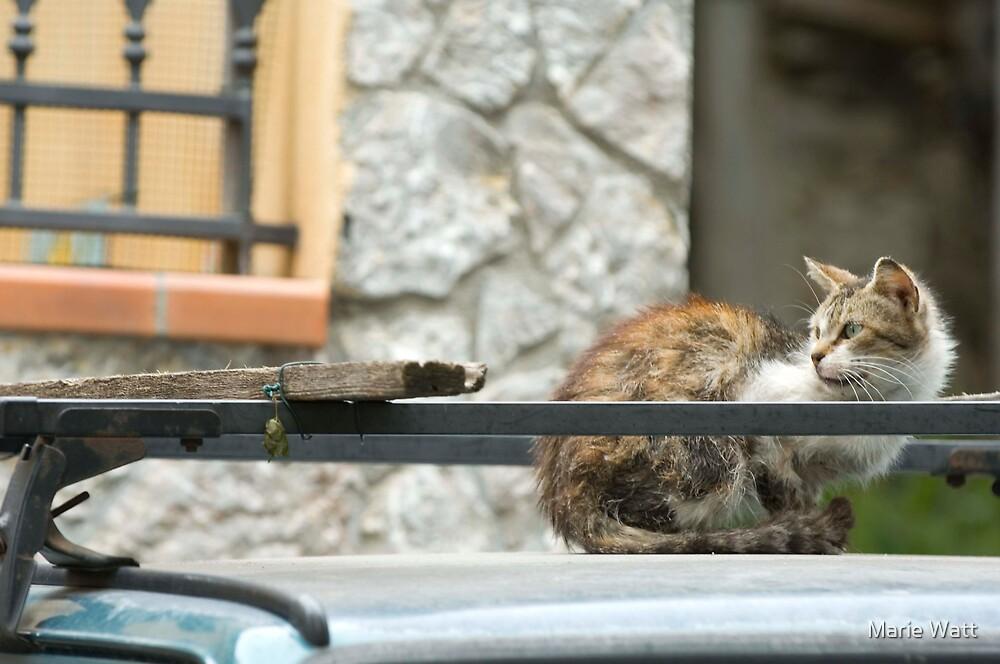 Cat on a Hot Tin Roof by Marie Watt