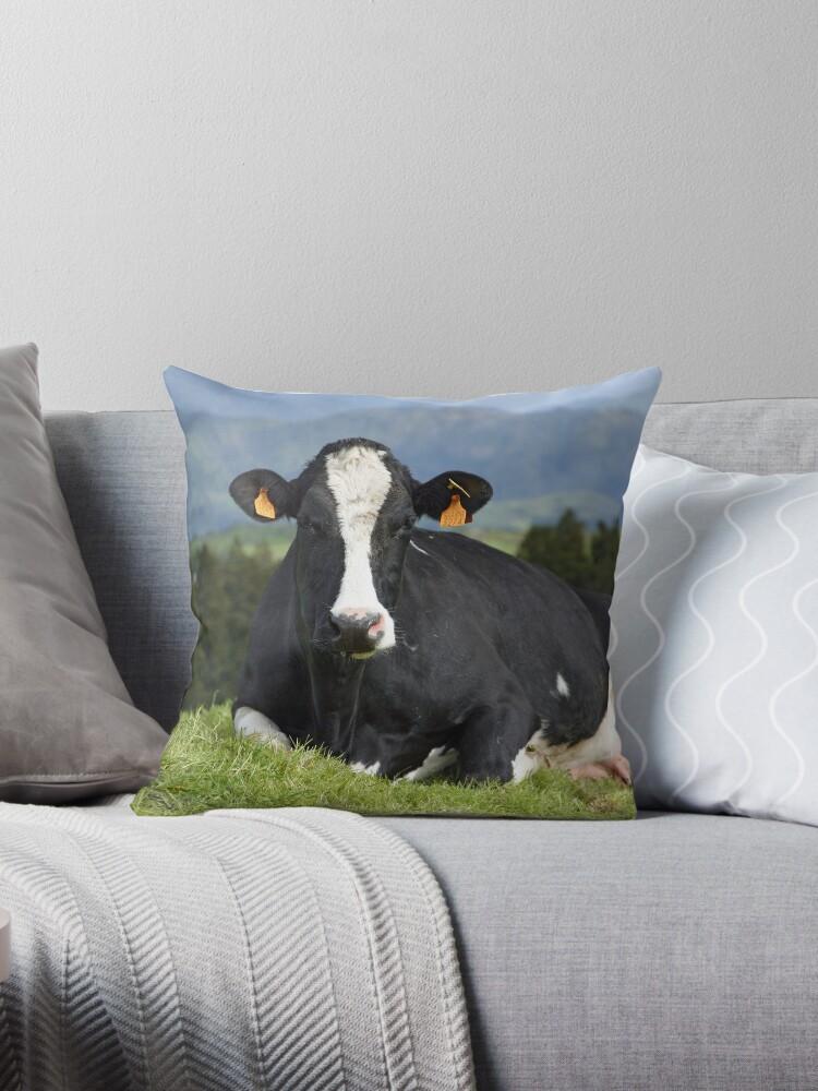 Cow portrait by Gaspar Avila