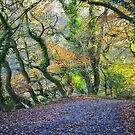 """"""" In Autumn's Bow Of Colours """" by Richard Couchman"""