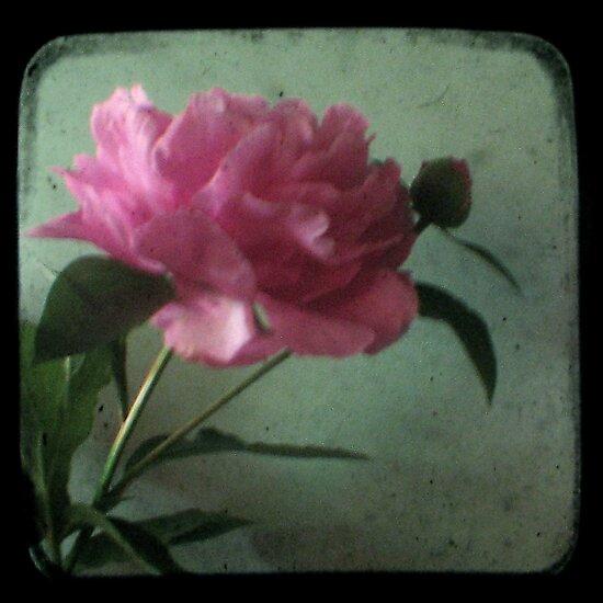 Grandma's Peonie - Still Life TTV by Kitsmumma
