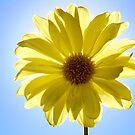 The Sun? by Misti Love