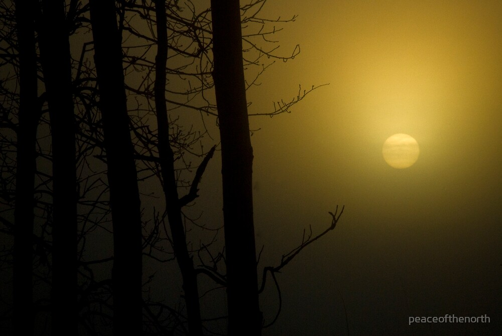 Four Trees and a Foggy Sun by peaceofthenorth