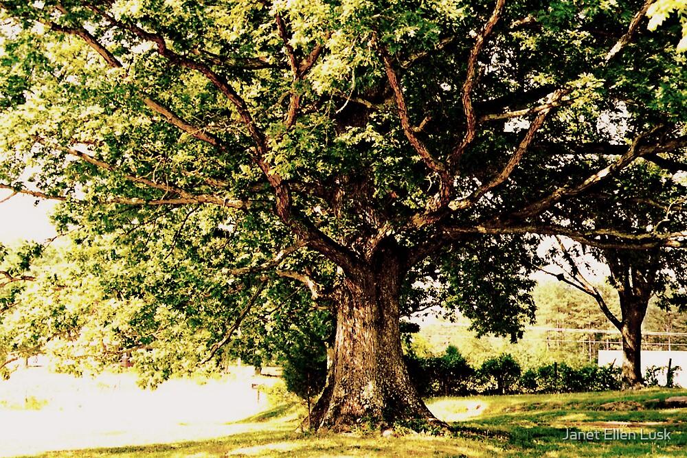 Under the Old Oak Tree by Janet Ellen Lusk