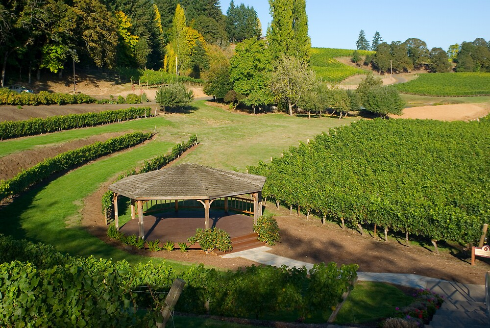 Oregon Wine country by Sharoncr