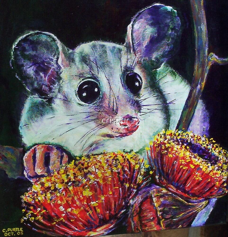 possum by christine purtle