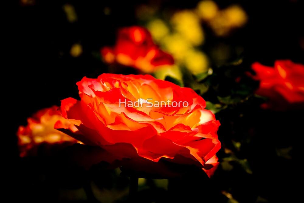 Red Roses by Hadi Santoro