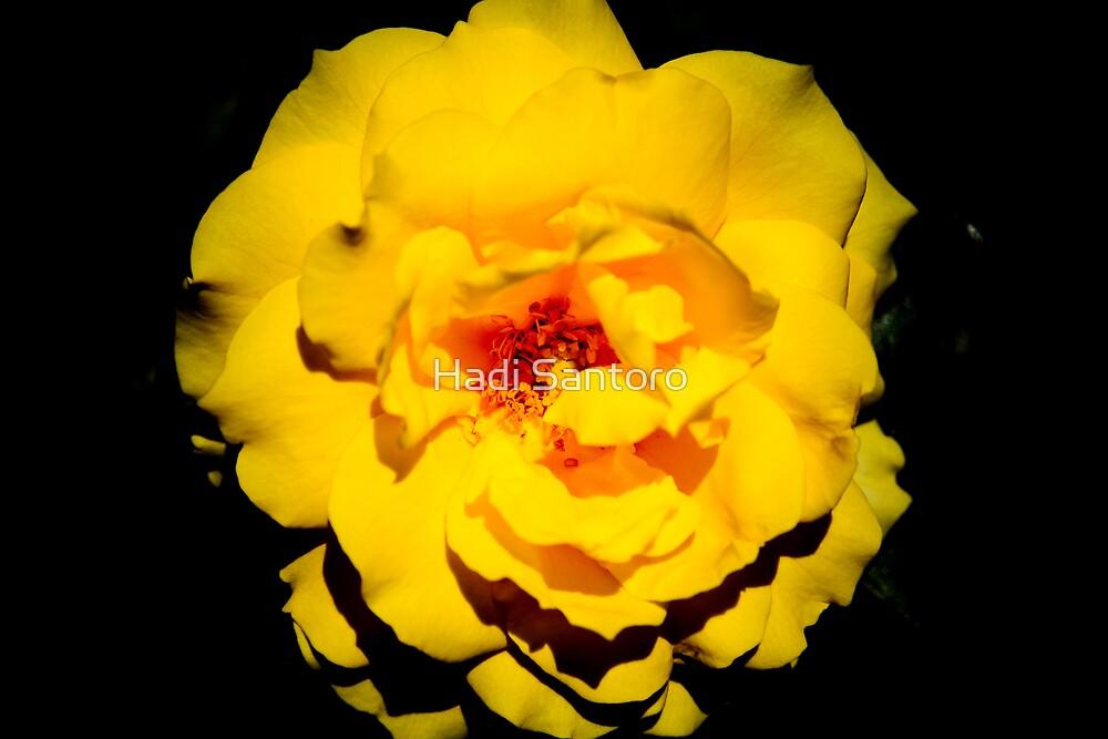 Yellow and Black by Hadi Santoro