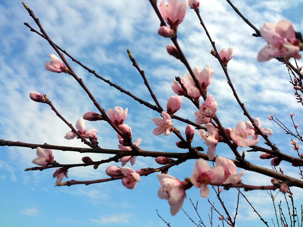 Pfirsich-Blüte von Gourmetkater