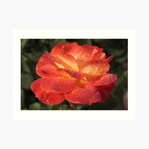 Sparkling Rose Art Print