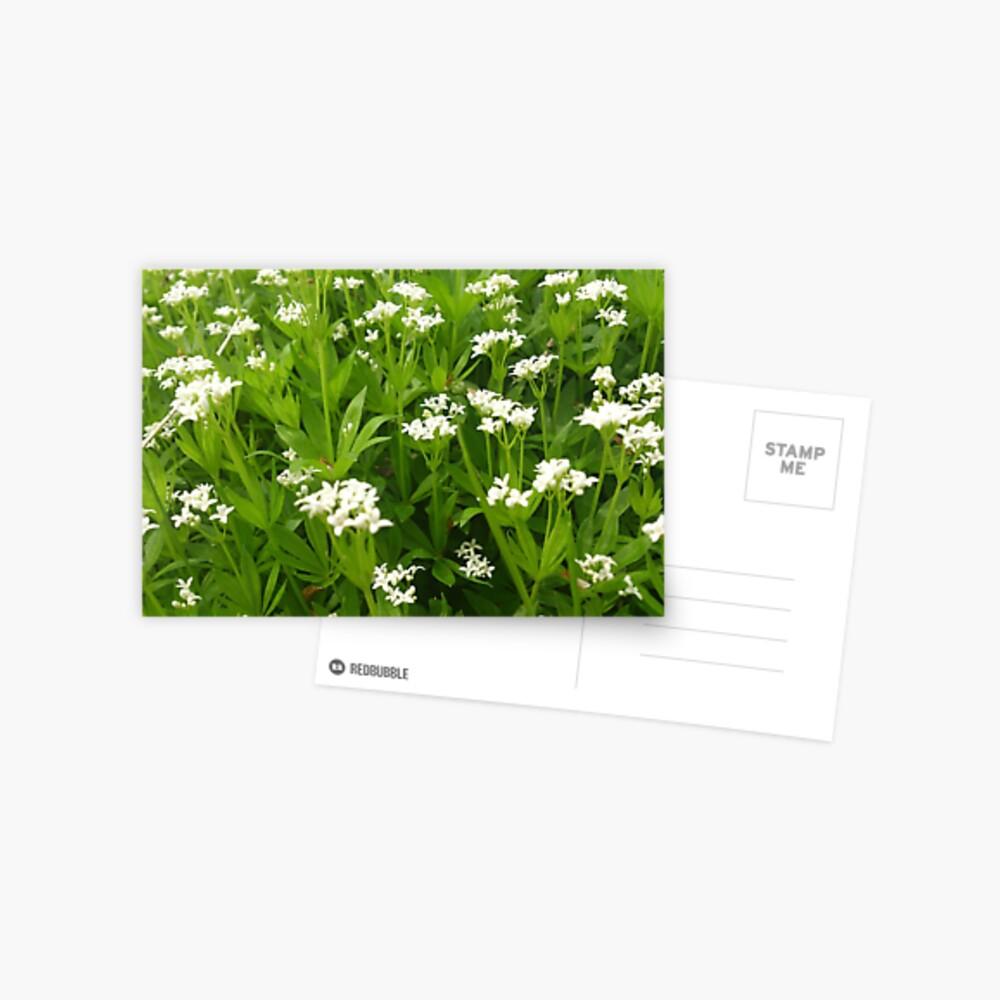 Unser Waldmeister Postkarte