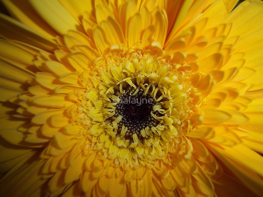 Not So Mellow Yellow by shalayne