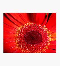 Red Raw Photographic Print