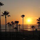 Sunset thru the Palms by Gloria Abbey