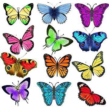 Butterfly Multi by JimmyGlenn