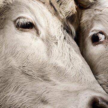 Farm Friends by ernest123