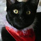 Chrissy Cat by NomadicGoddess